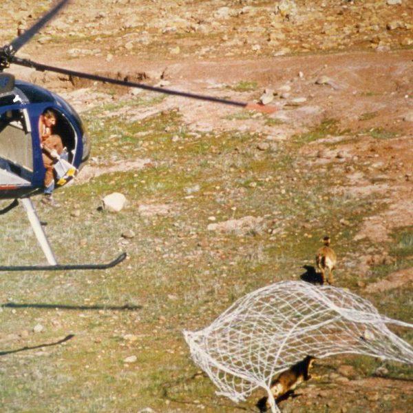 Wildlife Capture Yabani Hayvan Yakalama Ekipmanları