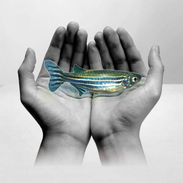 Zebra Balığı Barındırma Sistemleri